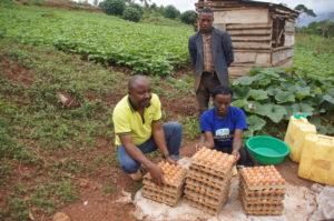 Moses, Mitarbeiter des RHU, sammelt die erfolgreich produzierten Eier auf dem Gelände MAYA